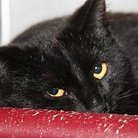 Adopt A Pet :: Hans - Marietta, OH