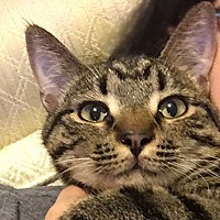 Adopt A Pet :: Rowan - Durham, NC