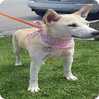 Adopt A Pet :: A1053967 at Kern County - Beverly Hills, CA