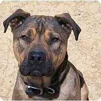 Adopt A Pet :: Simpson - Albany, NY