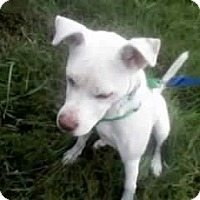 Adopt A Pet :: Sammy - Dundas, VA