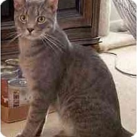 Adopt A Pet :: Harry - Alexandria, VA