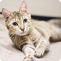 Adopt A Pet :: Autumn - Chicago, IL