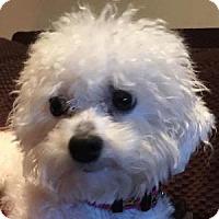 Adopt A Pet :: Erica - La Costa, CA