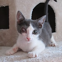 Adopt A Pet :: Cloud - San Bernardino, CA