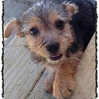 Adopt A Pet :: Ragnar - Bastrop, TX
