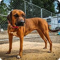 Adopt A Pet :: Sassy - Gilmer, TX