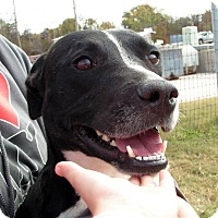 Adopt A Pet :: Trixie - Fort Worth, TX