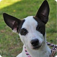 Adopt A Pet :: LIBERTY - Red Bluff, CA