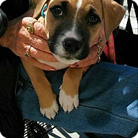 Adopt A Pet :: Jasper - Shallotte, NC
