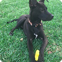 Adopt A Pet :: Barkley - Fort Collins, CO