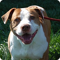 Adopt A Pet :: Darius - Wilmington, DE