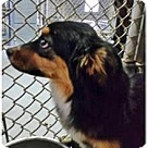 Adopt A Pet :: Belleh