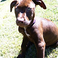 Adopt A Pet :: Renee - Valley Stream, NY