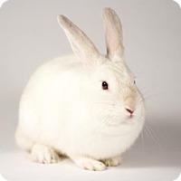 Adopt A Pet :: Maggie - Kingston, ON