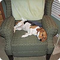 Adopt A Pet :: Penny - Vidalia, GA