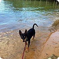 Adopt A Pet :: Bogart-Read note from Foster! - Bluff city, TN