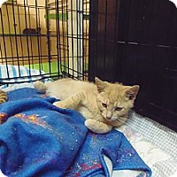Adopt A Pet :: Toby - Catasauqua, PA