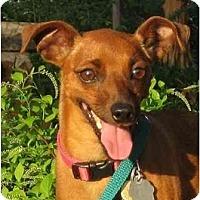 Adopt A Pet :: Minnie - Nashville, TN