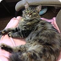 Adopt A Pet :: Maggie - Byron Center, MI