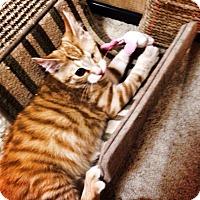 Adopt A Pet :: Samuel - Chesterfield Township, MI