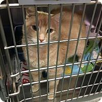 Adopt A Pet :: Felix - Richboro, PA