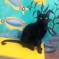 Adopt A Pet :: Melody - Newport Beach, CA