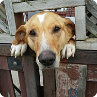 Adopt A Pet :: BORRIS - Toronto, ON