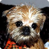 Adopt A Pet :: SCRUFFY - ADOPTION PENDING - Little Rock, AR