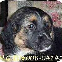 Adopt A Pet :: Tippy - Hamilton, ON