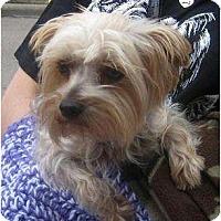Adopt A Pet :: Sparky - Conroe, TX