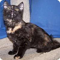 Adopt A Pet :: K-Kenna2-Keri - Colorado Springs, CO