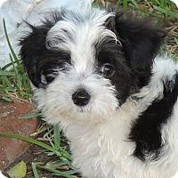 Adopt A Pet :: Dean - La Habra Heights, CA