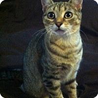 Adopt A Pet :: Miss Bialy - Alexandria, VA