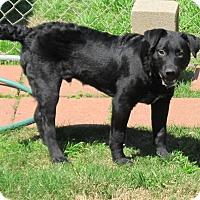 Adopt A Pet :: George - Kingwood, TX