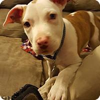 Adopt A Pet :: Tom Tom - Toledo, OH