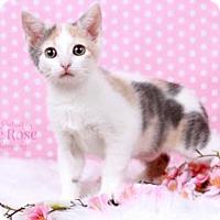 Adopt A Pet :: Hazel - Sterling Heights, MI