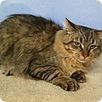 Adopt A Pet :: Rowan - Anchorage, AK