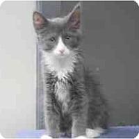 Adopt A Pet :: Edison - Milwaukee, WI