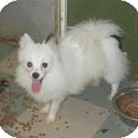 Adopt A Pet :: Kilo - Antioch, IL