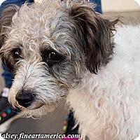 Adopt A Pet :: Trudy - Tucson, AZ