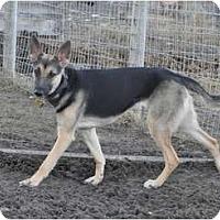 Adopt A Pet :: Shadow - Hamilton, MT
