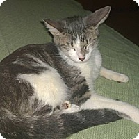 Adopt A Pet :: Laika - Lake Charles, LA