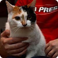 Adopt A Pet :: Paige - Pittsburgh, PA