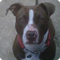 Adopt A Pet :: Pebbles - Kimberton, PA