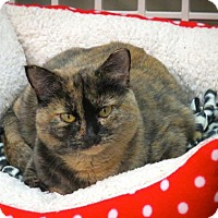 Adopt A Pet :: Tootie - Lakewood, CO