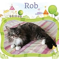Adopt A Pet :: Rob - Harrisburg, NC