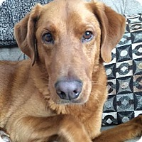 Adopt A Pet :: Brody - Knoxville, TN