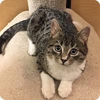 Adopt A Pet :: Corey - Jackson, NJ