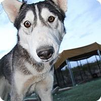 Adopt A Pet :: Leia - Alamogordo, NM